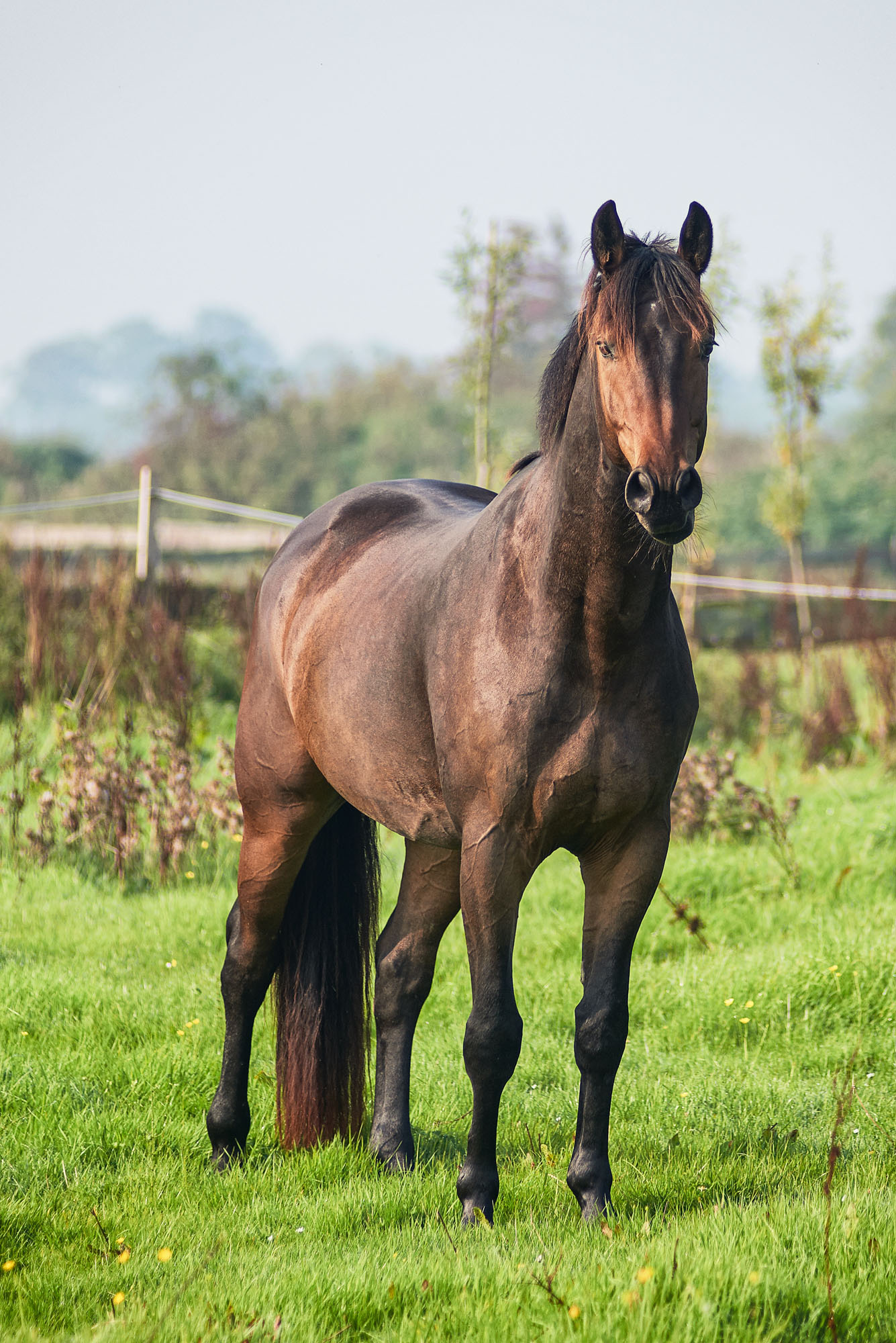 @brendamakayla   Mooie paarden, Paarden, Vakantie